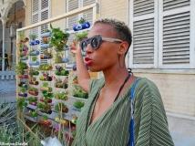 Caribbean Green Wall 15
