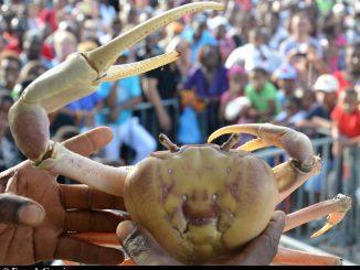 fete-du-crabe-1