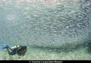 Bonaire j