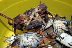crabs-2422026_960_720