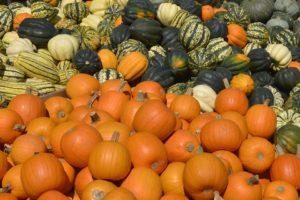 pumpkin-3676033_960_720