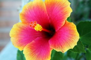 bloom-15753_960_720