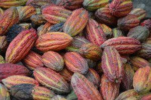 cocoa-3759829_960_720