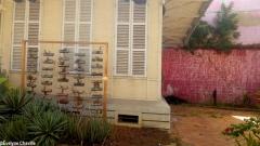 Caribbean Green Wall-Myriam Maxo 2