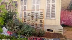 Caribbean Green Wall-Myriam Maxo 3