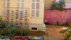 Caribbean Green Wall-Myriam Maxo 4
